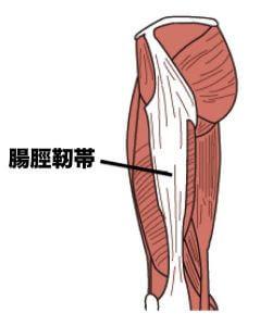「腸脛靭帯」の画像検索結果